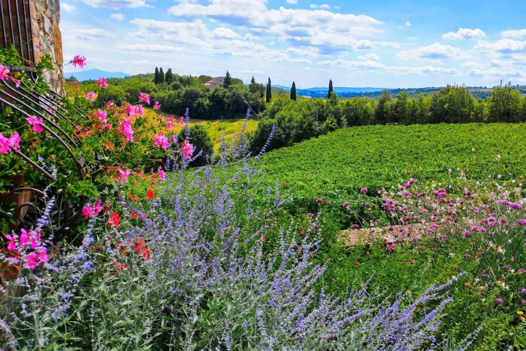 View on Chianti vineyards with flowers