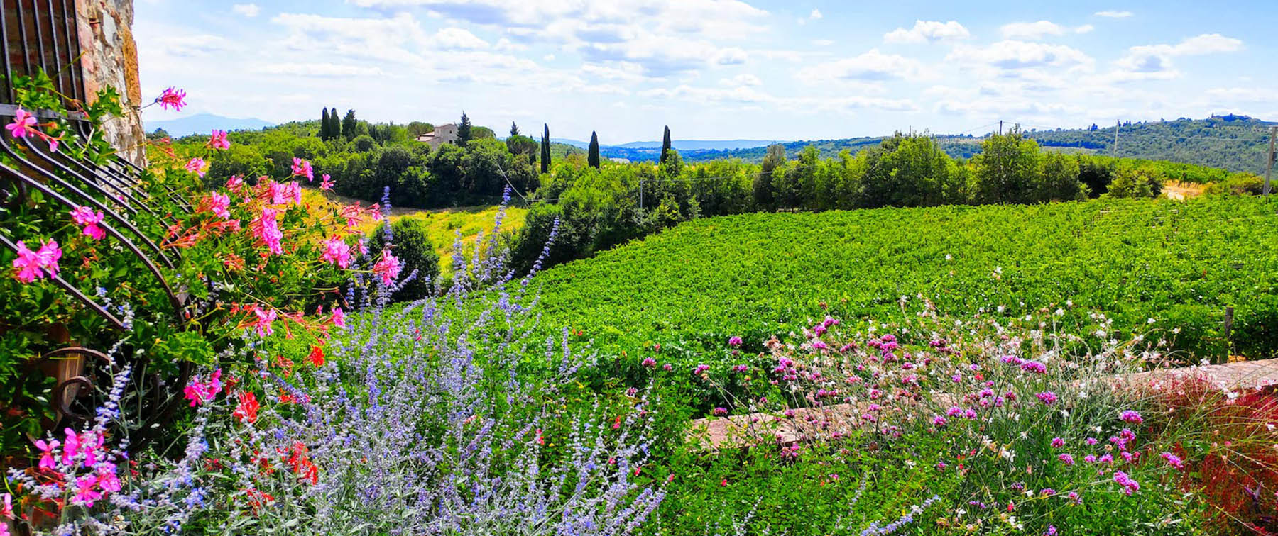 View on Chianti vineyards