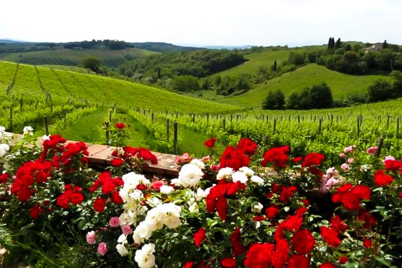 Chianti view with roses