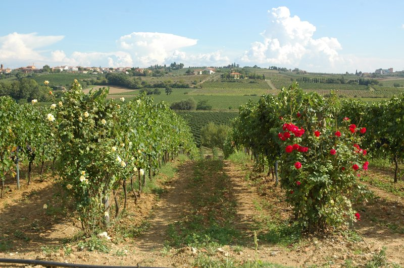 Gatta Vecchi Winery - Best wineries in Chianti Siena Tuscany