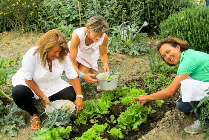 Picking tomatoes in Borgo Argenina vegetables garden - cooking classes in Chianti Siena Tuscany