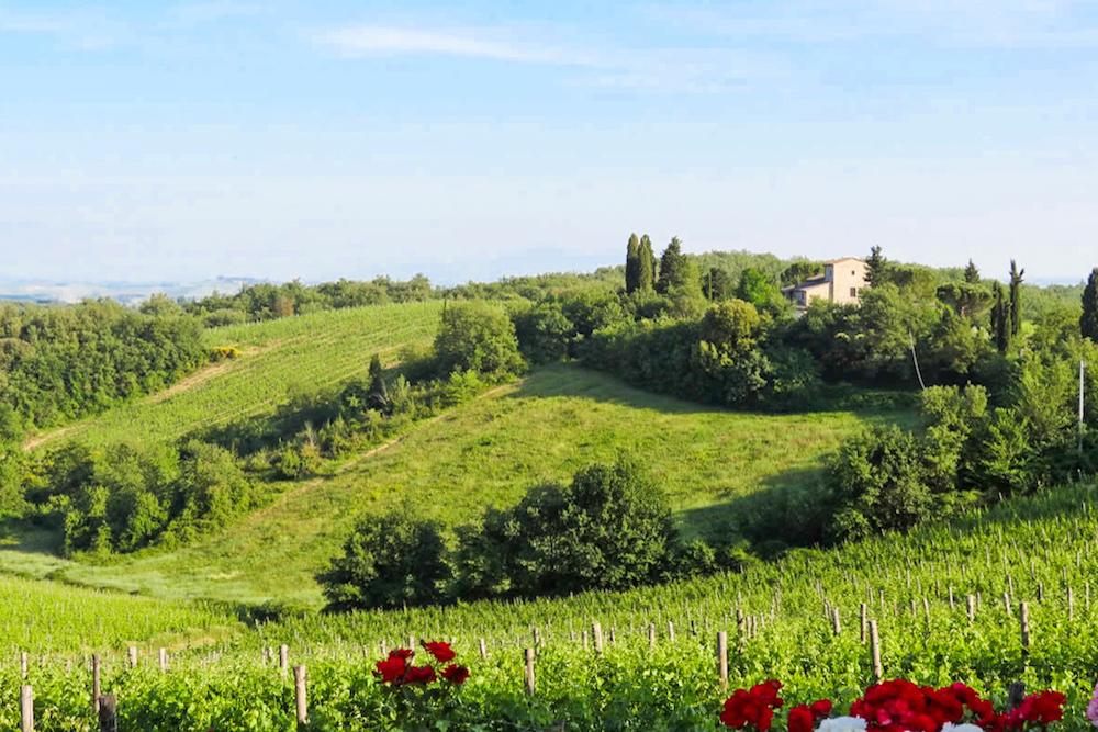 View on Chianti vineyards from Borgo Argenina windows