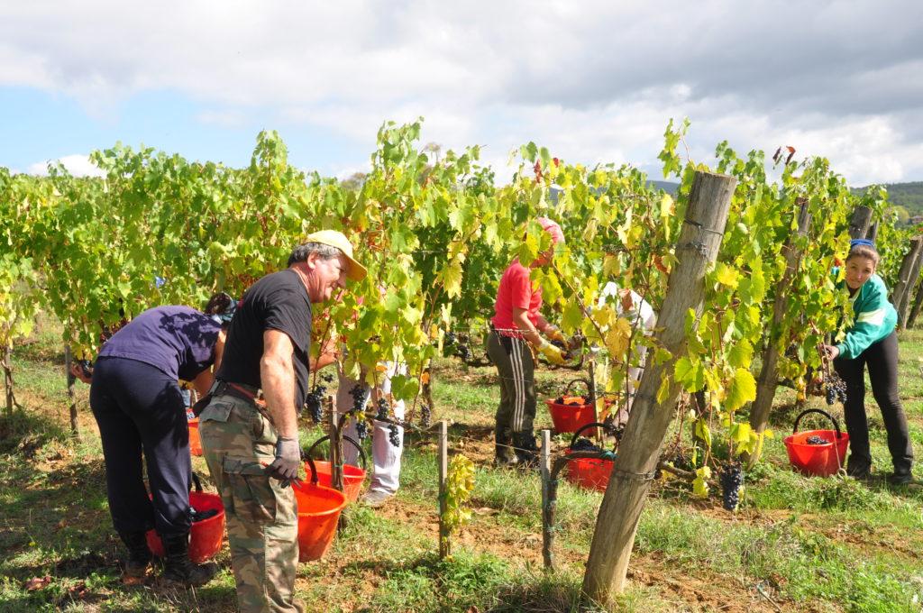Borgo Argenina :: Tuscany villa rental in Chianti