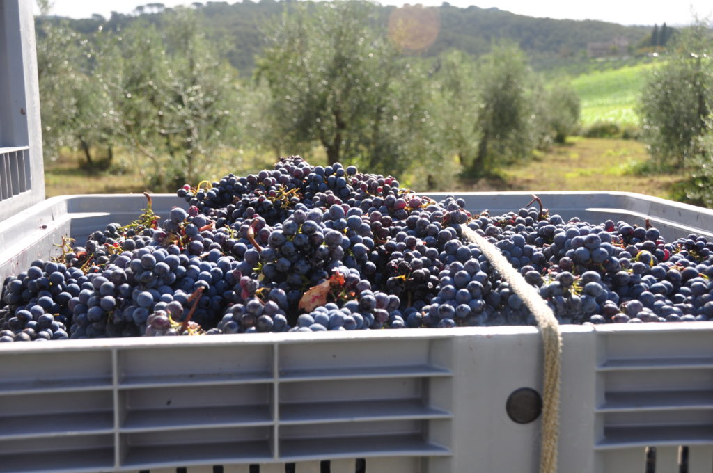 Borgo Argenina :: Staying in Tuscany for the grape harvest