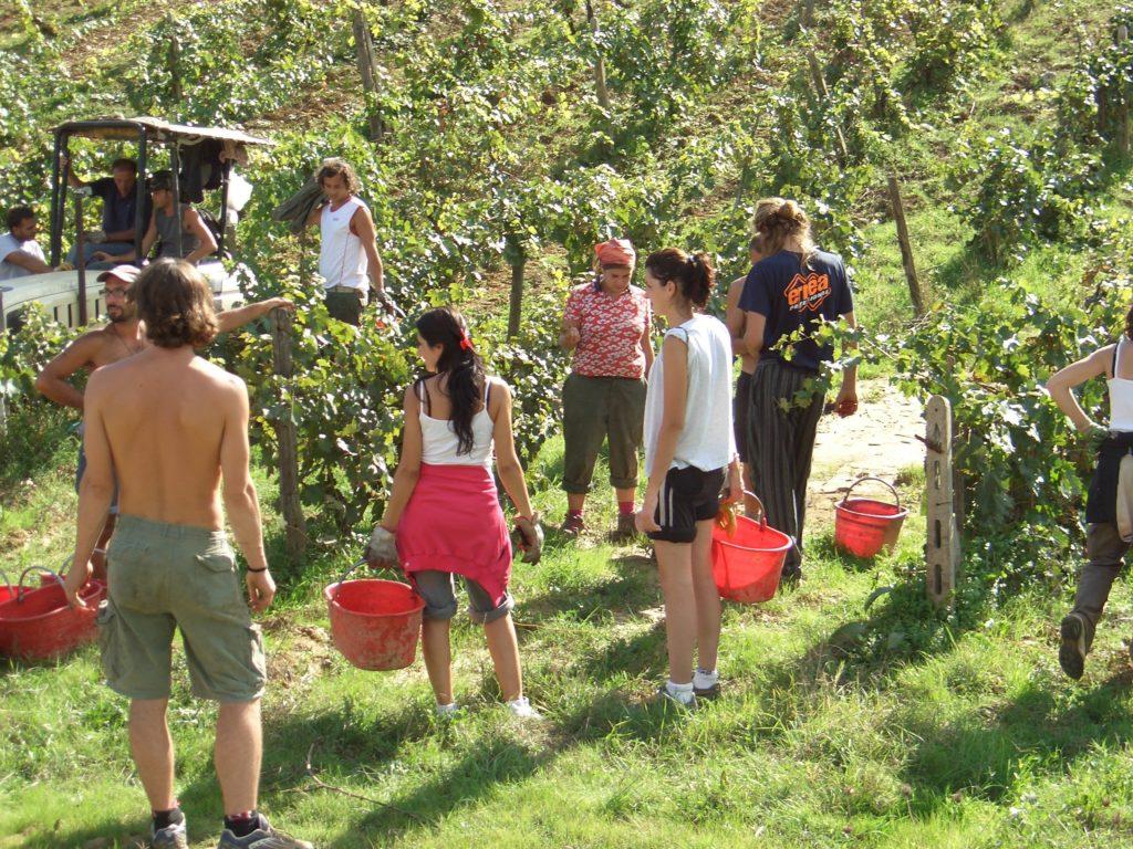 Borgo Argenina :: Friends and the grape harvest in Chianti
